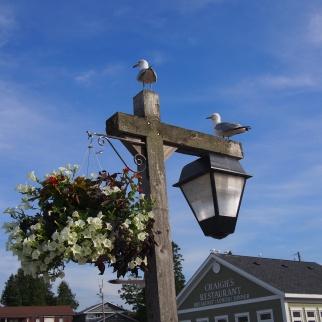 Cheeky seagulls