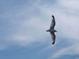 Followed by a seagull